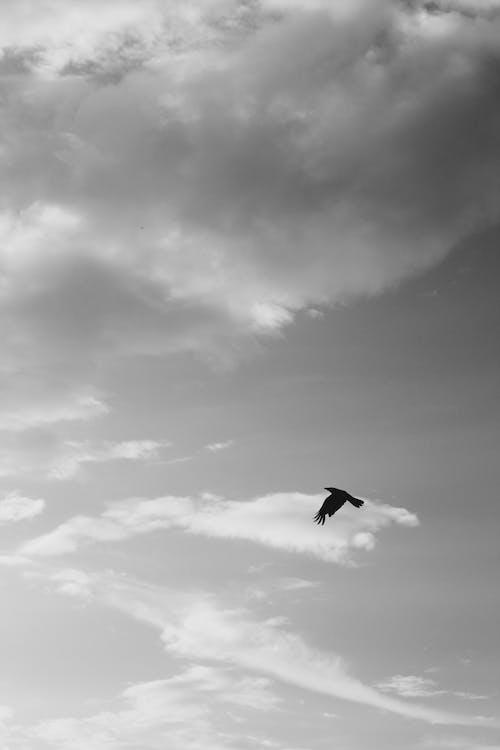 karga, siyah ve beyaz içeren Ücretsiz stok fotoğraf