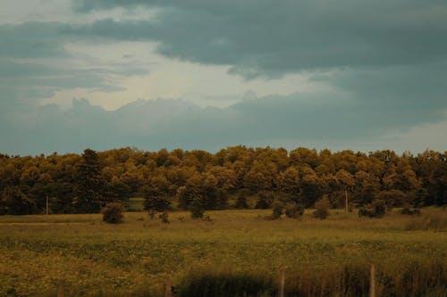 manzara, orman içeren Ücretsiz stok fotoğraf