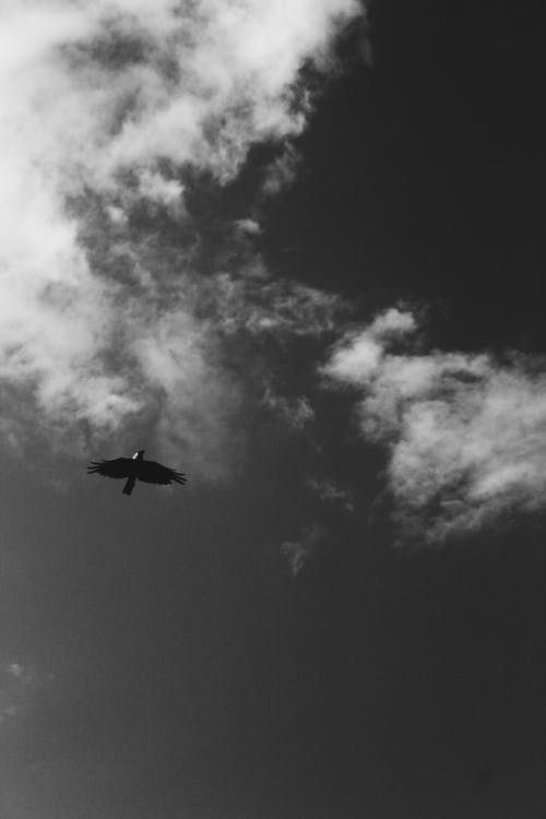 bakış açısı, dar açılı çekim, kuş, siyah ve beyaz içeren Ücretsiz stok fotoğraf