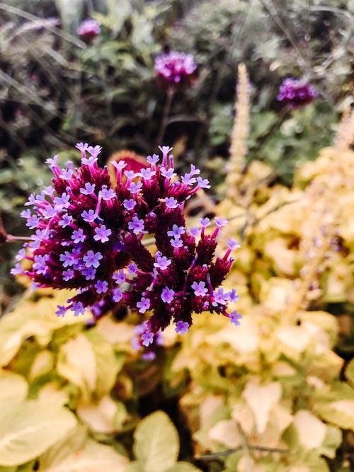Fotos de stock gratuitas de afuera, botánico, calentar, Canadá