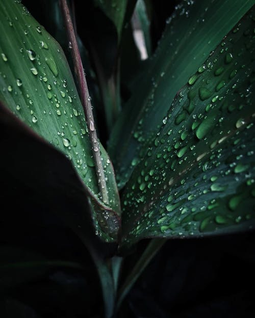 Close-Up Photography Of Green Leaf