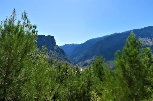 Δωρεάν στοκ φωτογραφιών με bitki, βουνά, δασικός, δέντρο