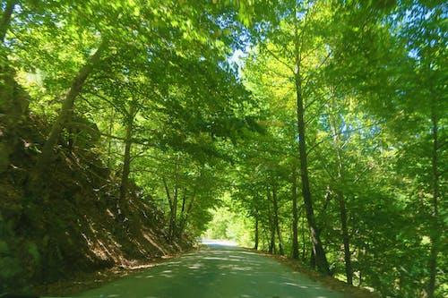 Δωρεάν στοκ φωτογραφιών με bitki, δασικός, δέντρο, δρόμος