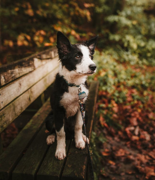 Selective Focus Photo of a Short-coated White and Black Puppy Sitting on a Bench
