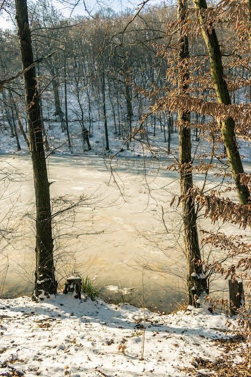 Darmowe zdjęcie z galerii z biały, chodzić, drewno, drzewa