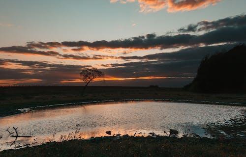 Darmowe zdjęcie z galerii z chmury, drzewo, jezioro, las