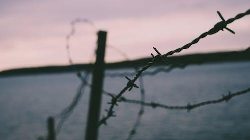 Základová fotografie zdarma na téma drát, krajina, lehký, ostnatý drát