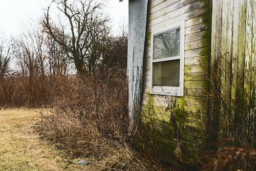 Foto profissional grátis de arrepiante, assombrado, barracão, cabana