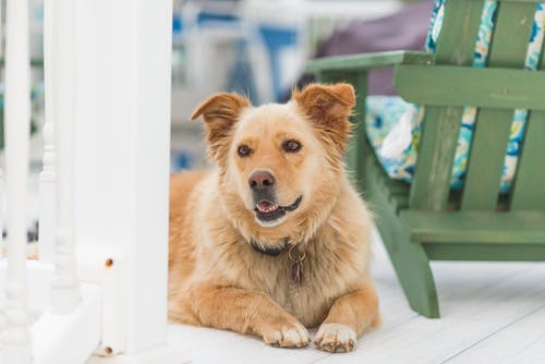 Foto profissional grátis de atenção, bom cachorro, bonita, branco