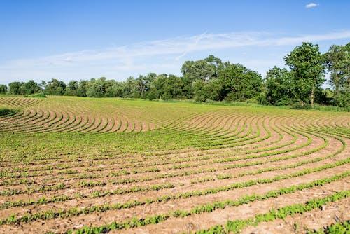 Foto profissional grátis de agricultor, agricultura, América, área