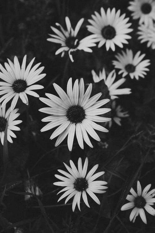 Бесплатное стоковое фото с завод, лепестки, сад, флора