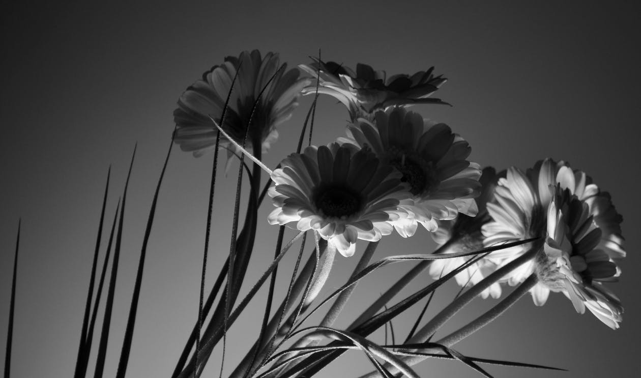 Grayscale Photography of Petaled Flowers