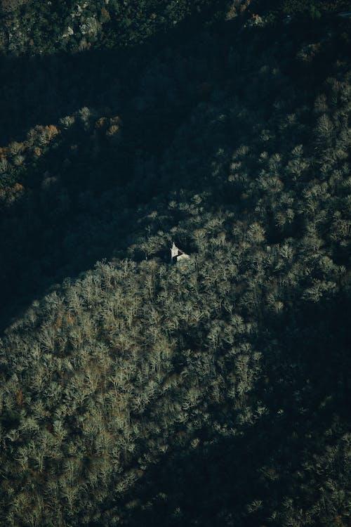 Foto d'estoc gratuïta de a l'aire lliure, aeri, alba, arbres