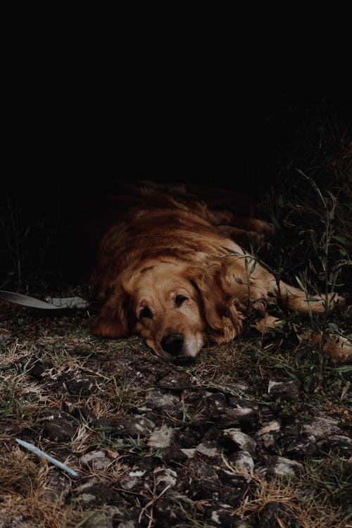 Photo of Sad Dog Lying Down on The Ground