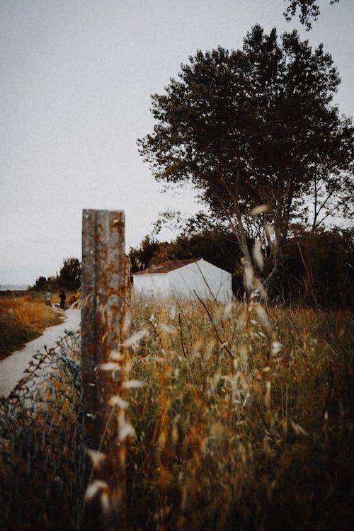 คลังภาพถ่ายฟรี ของ กลางวัน, กลางแจ้ง, กั้นรั้ว, การท่องเที่ยว