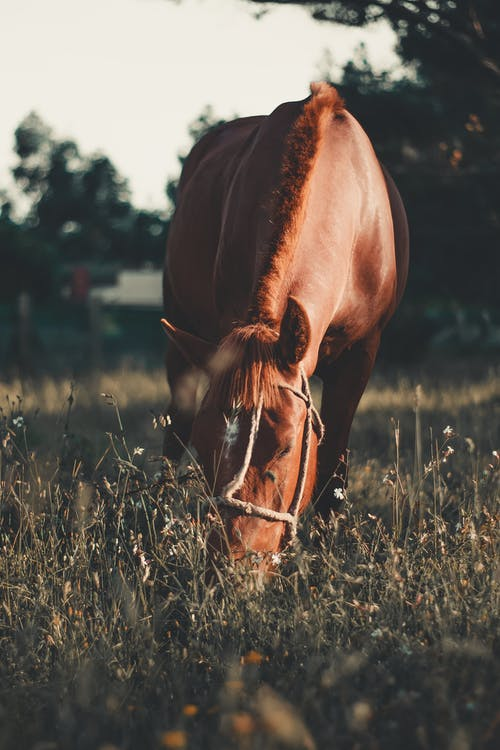 HorseOn Grass Field