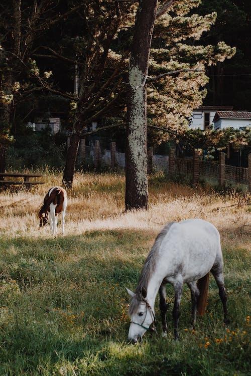 Darmowe zdjęcie z galerii z łąka, pole, ssak, trawa