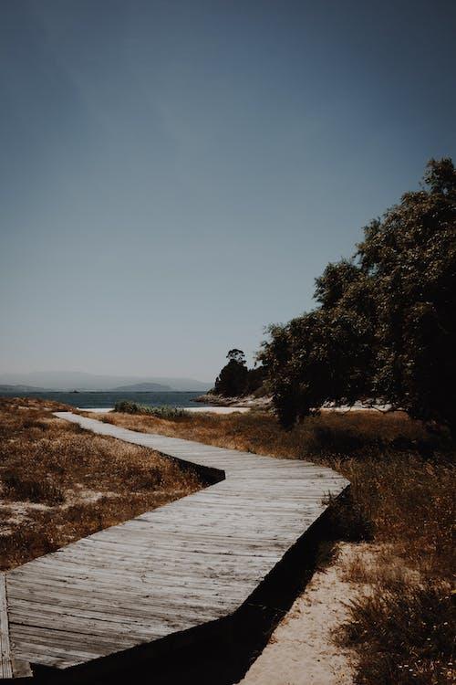 Darmowe zdjęcie z galerii z brązowy, chodnik, ciemny, drewniany