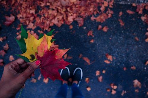 Fotos de stock gratuitas de caer, hojas, hojas de otoño, otoño