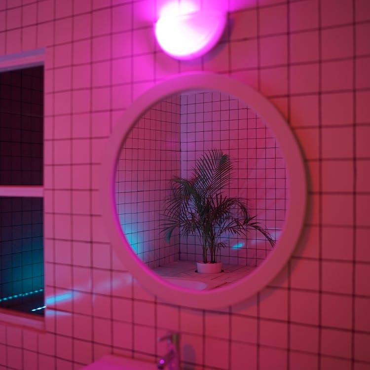 mirall, planta, planta en un test