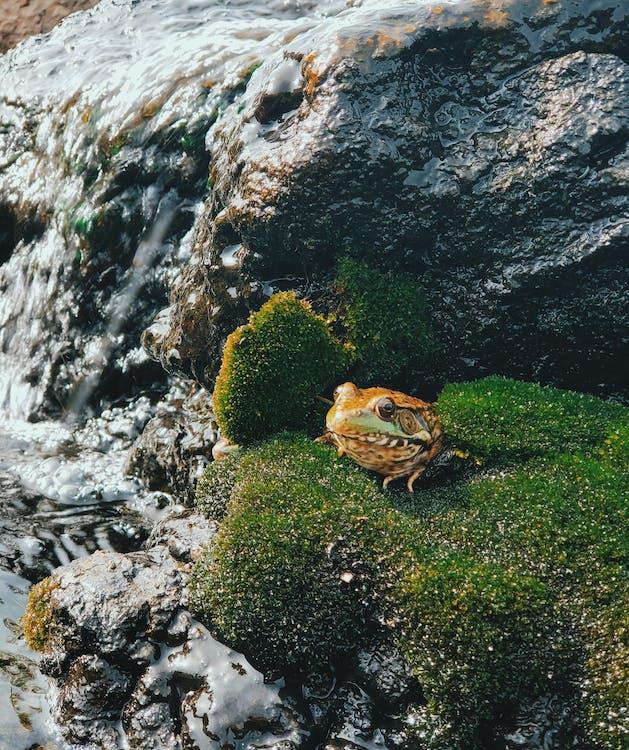 Ilmainen kuvapankkikuva tunnisteilla eläin, kallio, kivi