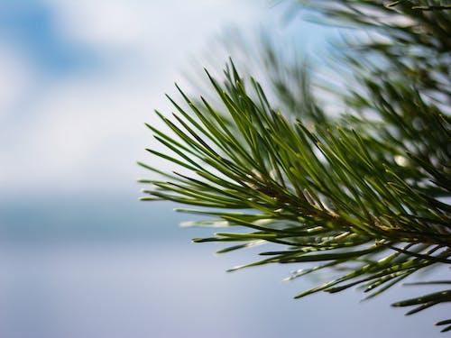 naturee, photgrapher 的 免费素材照片