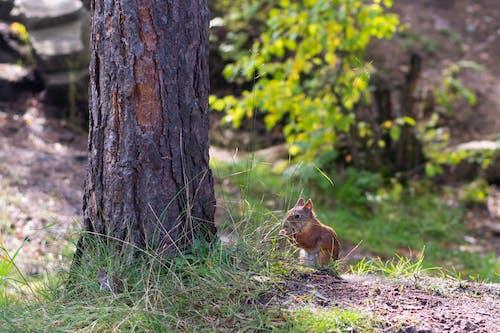 Ilmainen kuvapankkikuva tunnisteilla naturee, treess