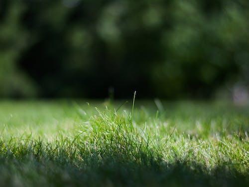 夏天, 天性, 滴, 綠草地 的 免费素材照片