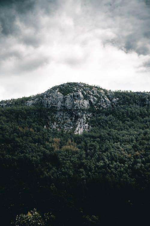arbres, bosc, fiord