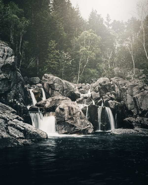 arbres, bosc, cascades