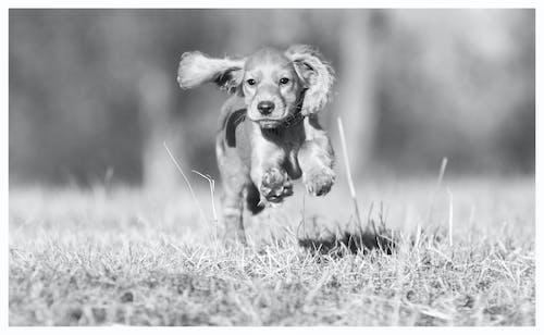 享受, 努力, 動物, 友善 的 免費圖庫相片