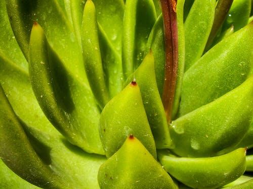 kaktüs bitkisi, yağmur damlaları, yeşil içeren Ücretsiz stok fotoğraf