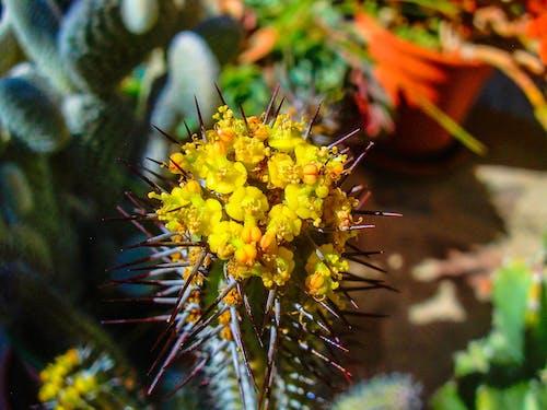 Bahçe, doğa, kaktüs çiçeği içeren Ücretsiz stok fotoğraf