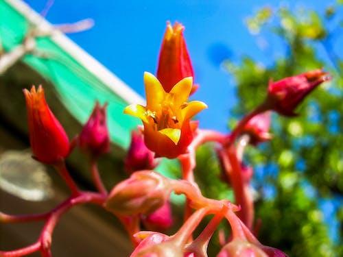 Bahçe, Çiçekler, doğa, Ebegümeci içeren Ücretsiz stok fotoğraf