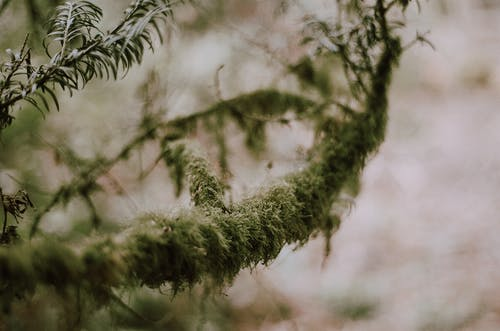 Mossy branch of tree in forest