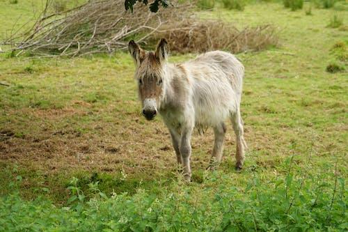 Gratis arkivbilde med âne, animalier, domes, ferme