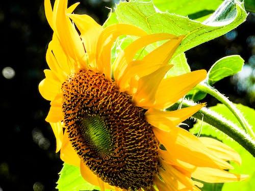 Free stock photo of beautiful flower, botanic garden, botanical garden, botany