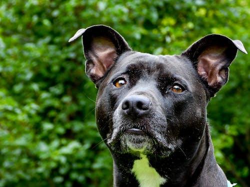 Free stock photo of alert, animal, Animal Kingdom, beautiful eyes