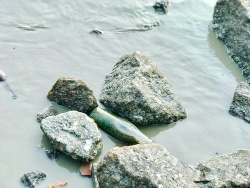 Fotos de stock gratuitas de basura, cerca del mar, contaminación, junto a la playa