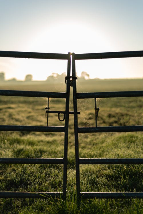Old Gray Metal Gate On Lush Grass Field