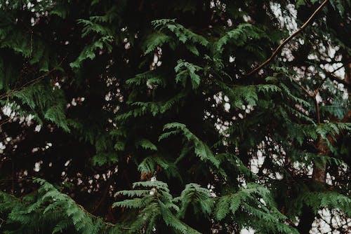 Gratis lagerfoto af grene, plante