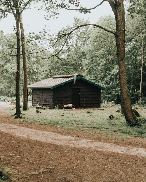 Photo of Wooden Cabin on Forest