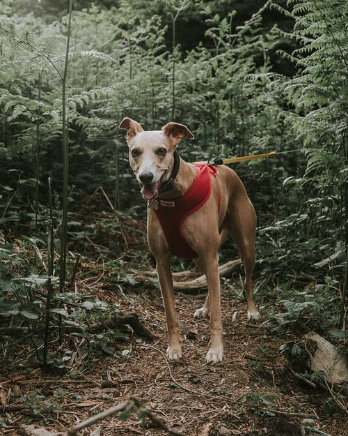 Photo Of Dog Near Plants