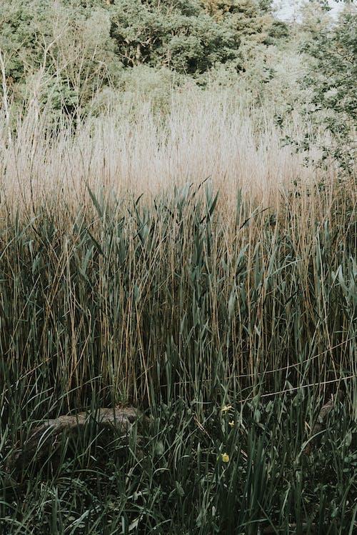 들판, 식물, 잔디의 무료 스톡 사진