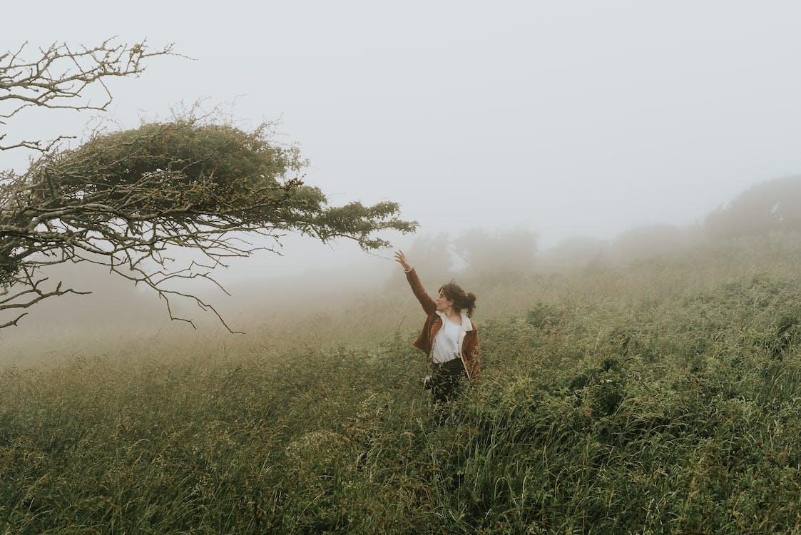 Деревина, дерево, жінка