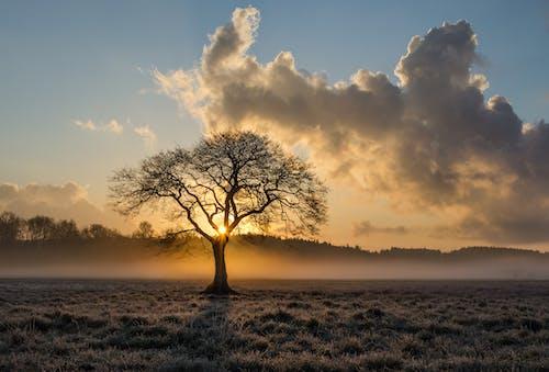 คลังภาพถ่ายฟรี ของ กลางวัน, ดราม่า, ดวงอาทิตย์, ต้นไม้