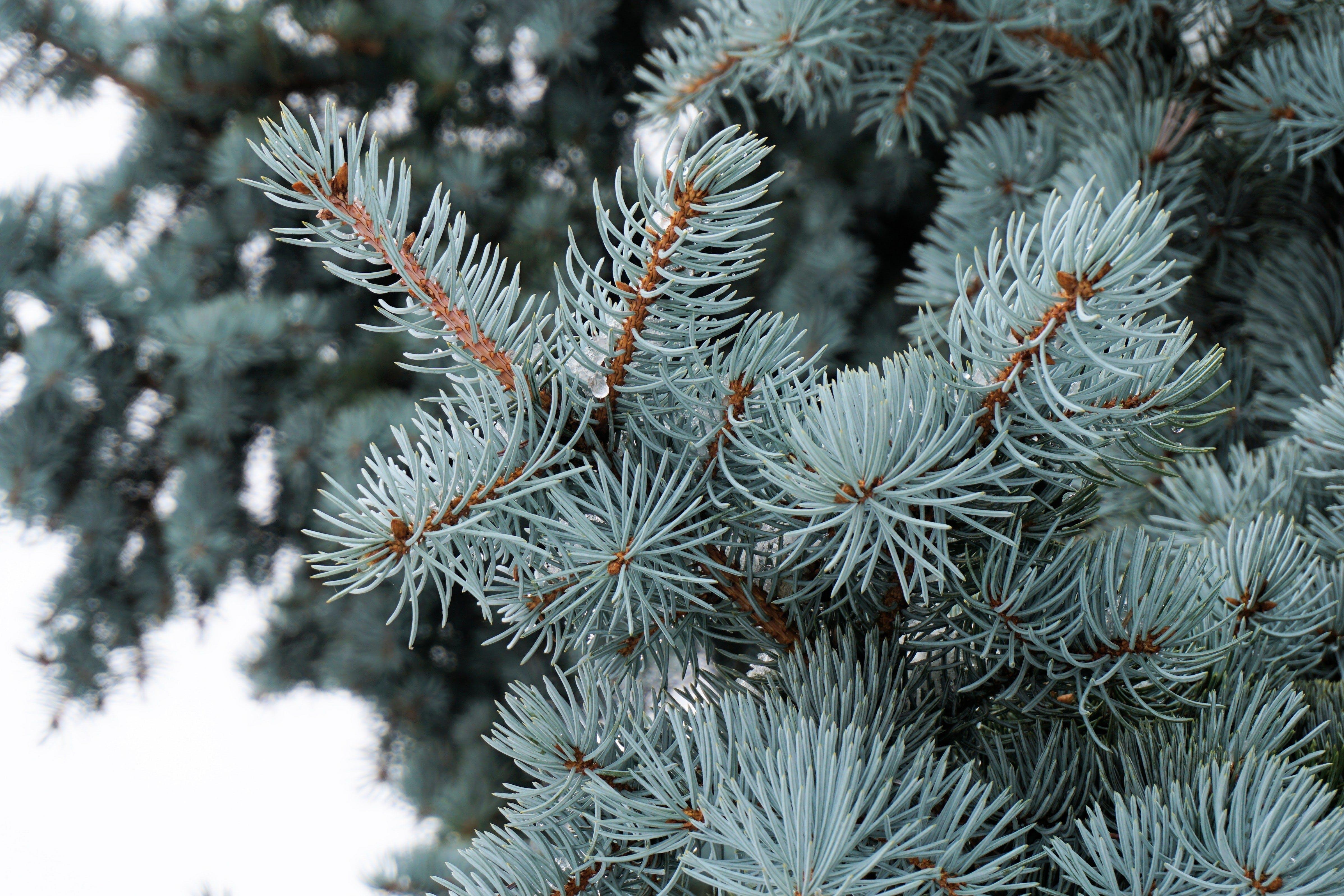 Free stock photo of wood, nature, winter, tree