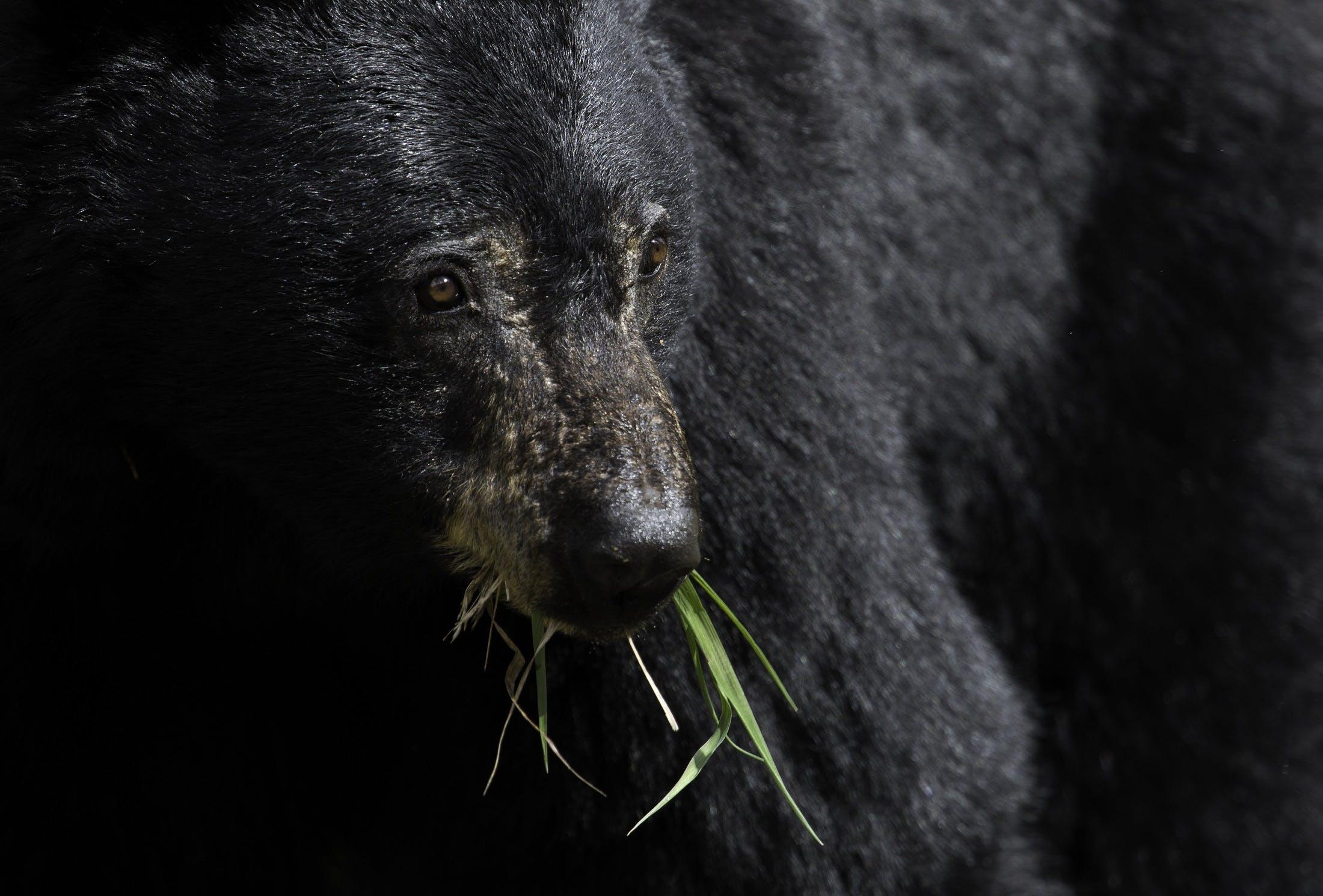 Free stock photo of nature, eating, animal, big