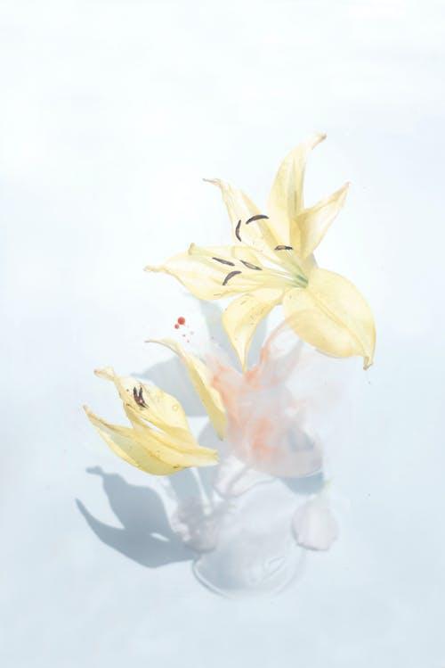 คลังภาพถ่ายฟรี ของ การทาสี, ดอกลิลลี่, ดอกไม้, ผ้าใบ