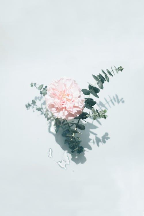 Gratis lagerfoto af blomst, flora, kronblade, maling